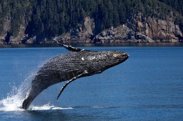 beaucoup de vitesse de poisson datant de Vancouver ce que la vitesse de datation est comme