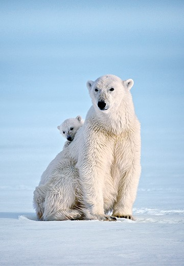 Dominic-Barrington_Polar-Bear-2018.jpg