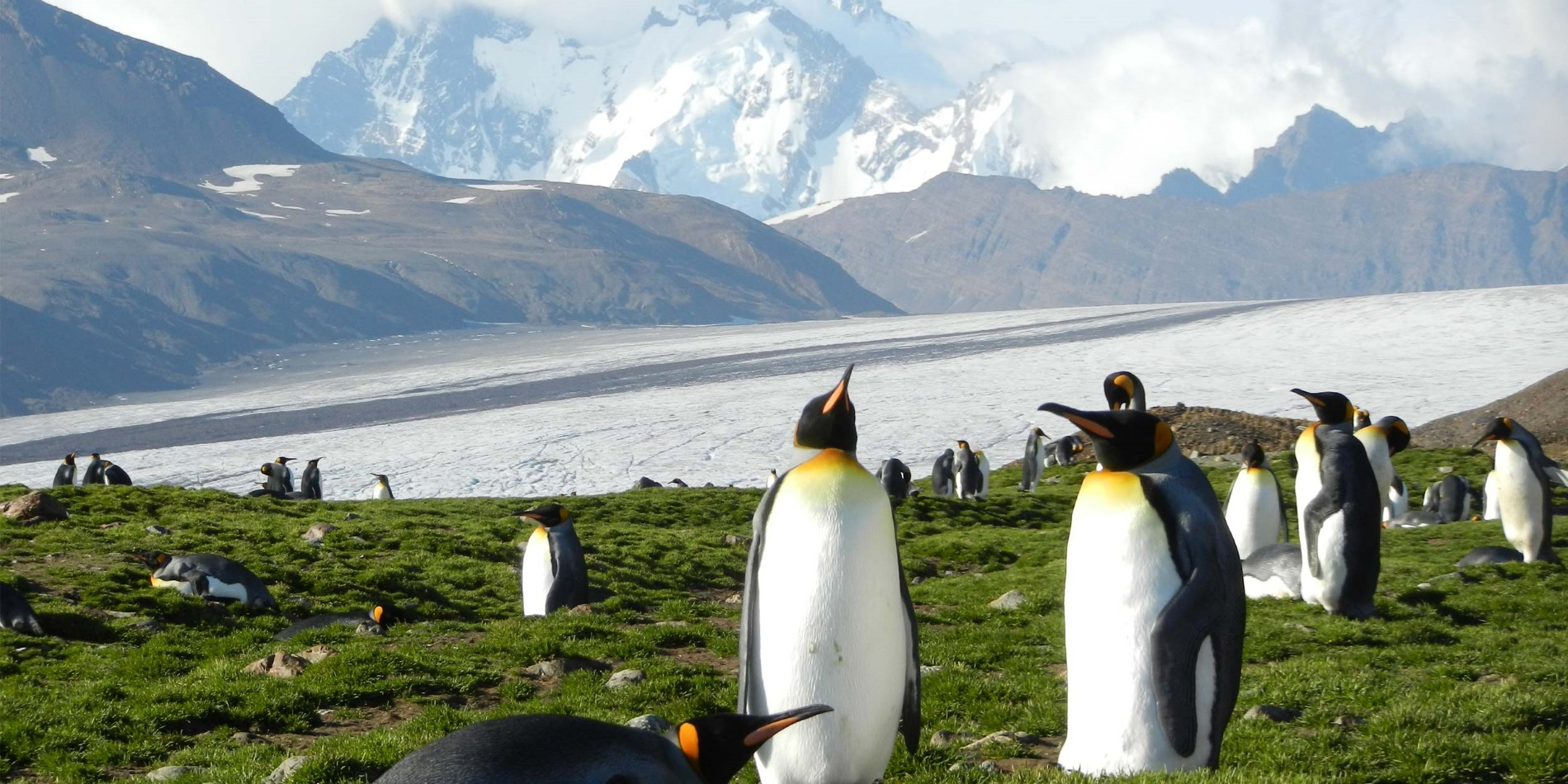 King-Penguins_Fortuna-Bay_Daniel-Avis.JPG